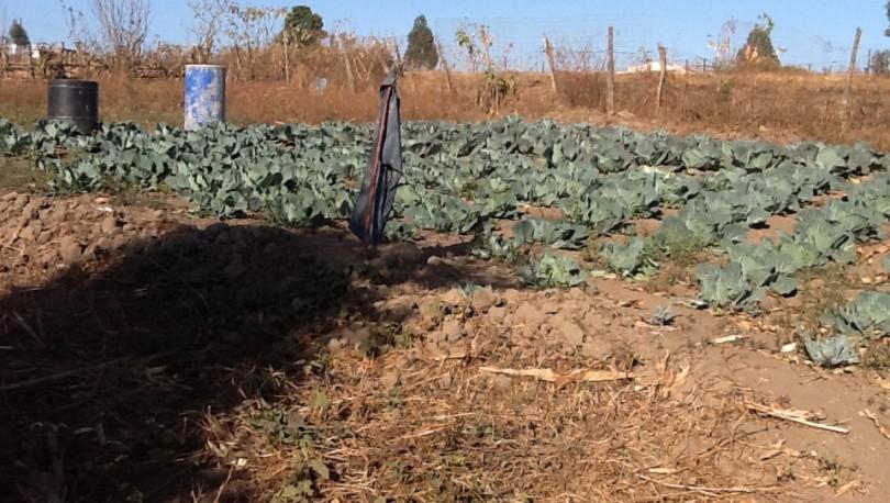 mayalo-food-garden-3